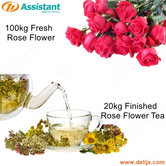 20kg Finished Rose Flower Tea Drying Processing Machine 100kg Fresh Tea Drying Machine
